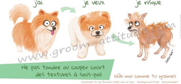 spitz_groom attitude_affiche_Laetitia aynié illustrations_tonte